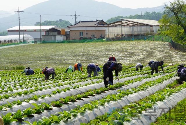 농촌지도자 제천시연합회, 농가봉사활동.jpg